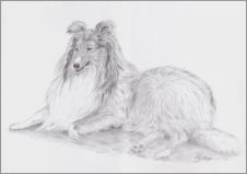 Collie, Graphit, 42 x 29,7 cm